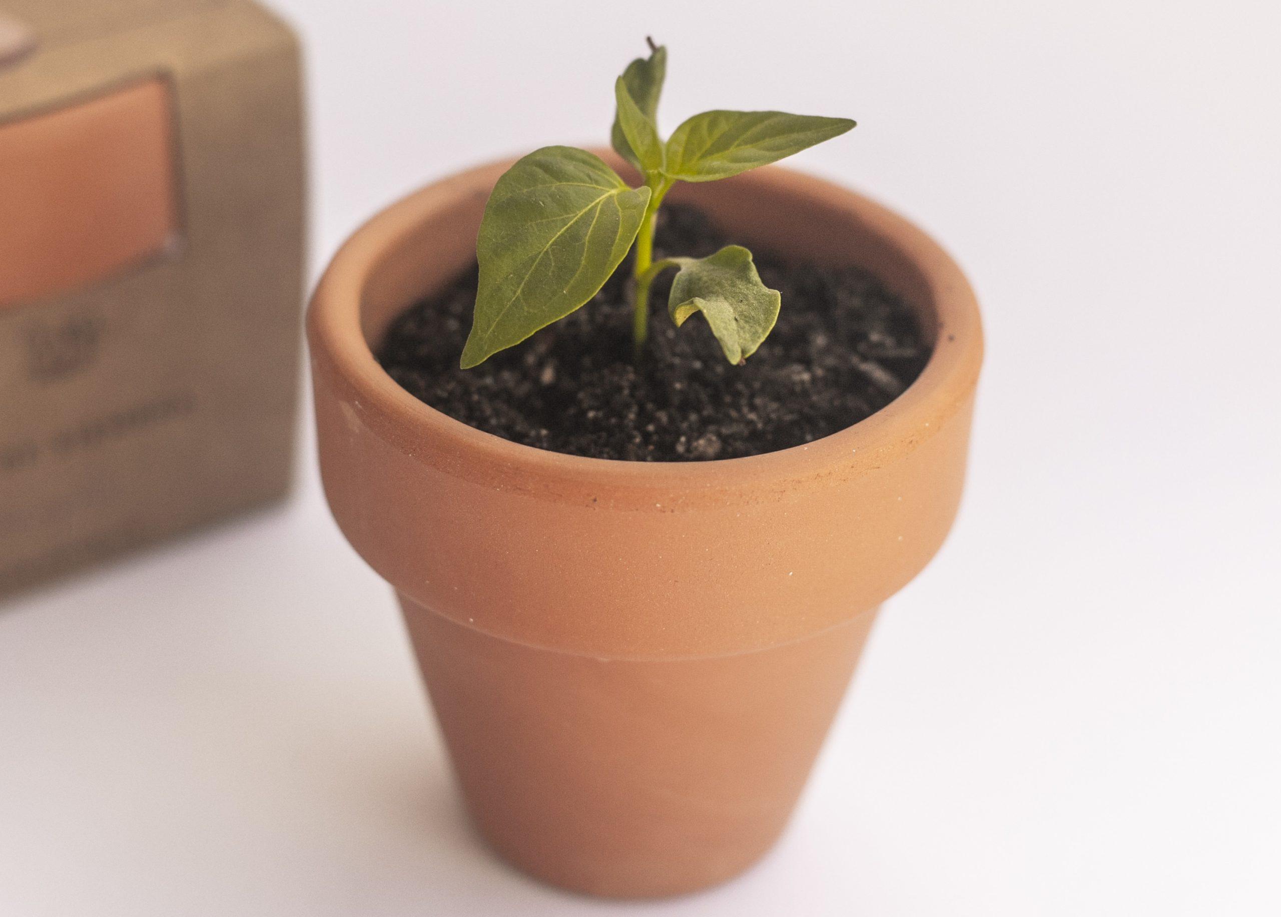 planta papeleria sostenible regalo ecologico