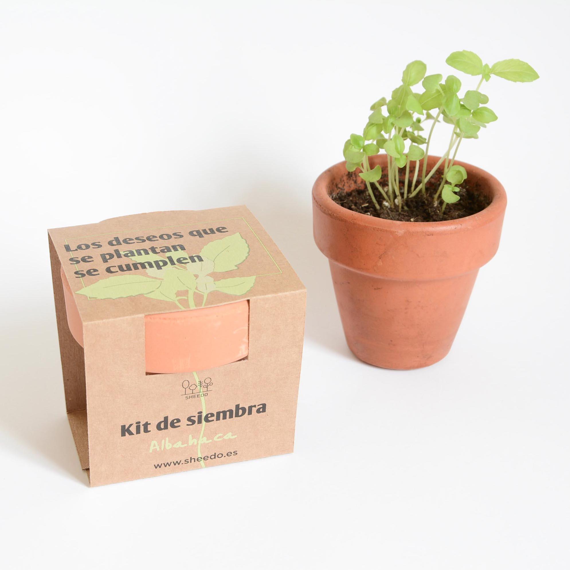 kit para sembrar albahaca